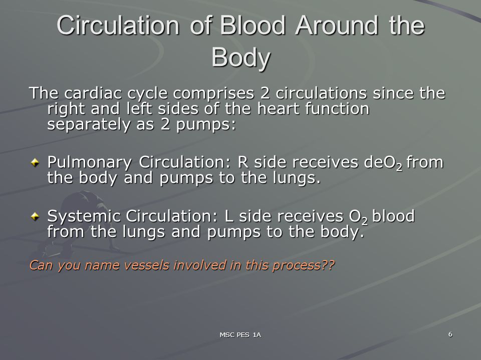 Circulation of Blood Around the Body