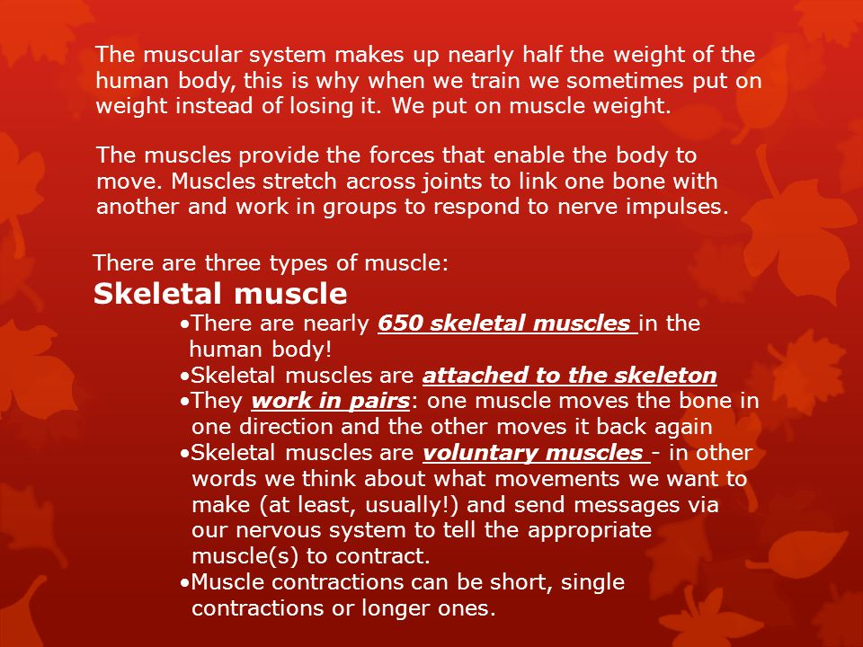 muscular system. - ppt download, Muscles