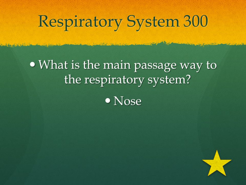 What is the main passage way to the respiratory system