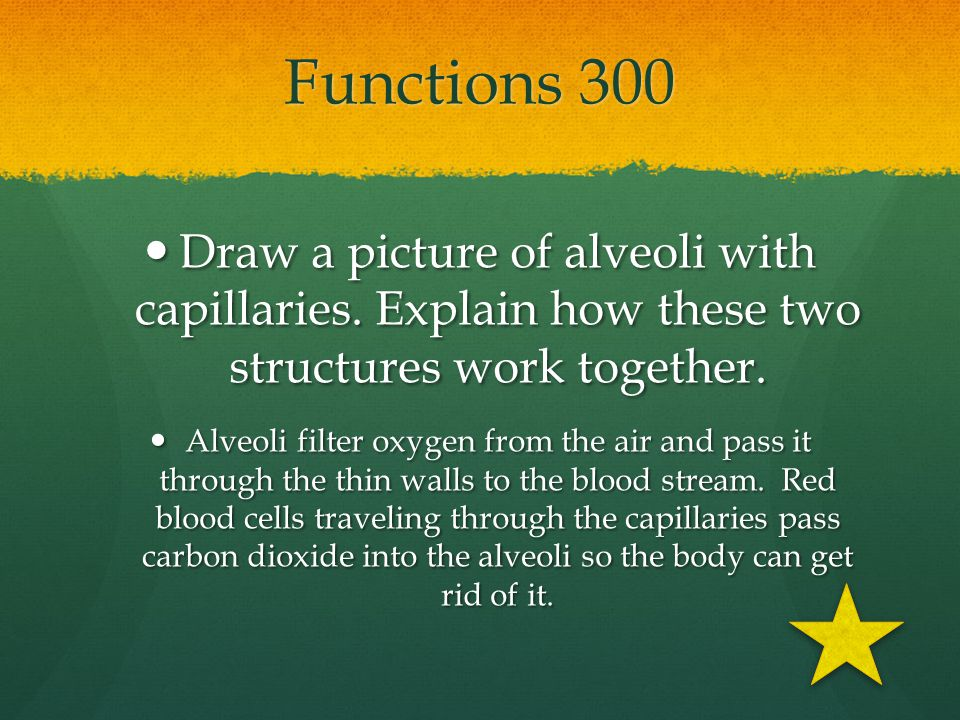 Functions 300 Draw a picture of alveoli with capillaries. Explain how these two structures work together.
