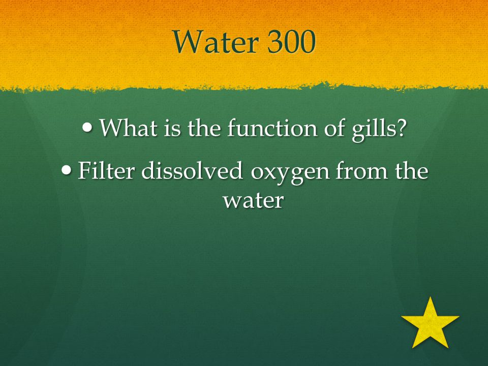 Water 300 What is the function of gills
