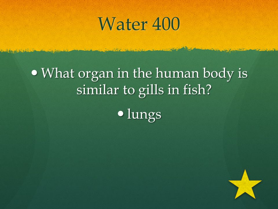 What organ in the human body is similar to gills in fish