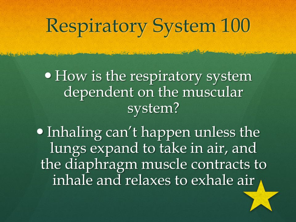 How is the respiratory system dependent on the muscular system