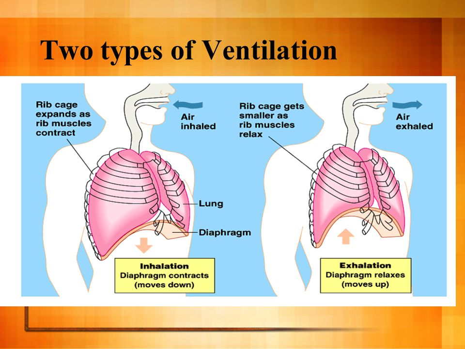 Types Of Ventilation Systems : Human breathing system ppt video online download