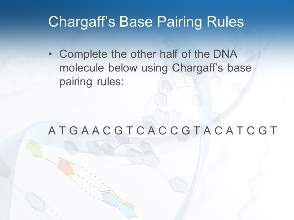 Chargaff's Base Pairing Rules