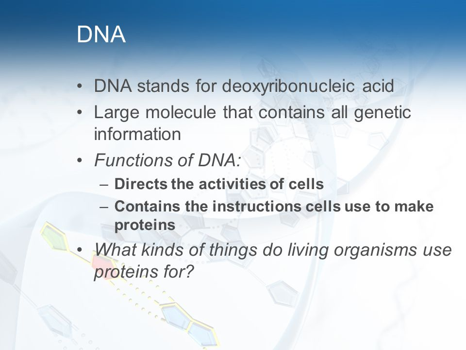 DNA DNA stands for deoxyribonucleic acid