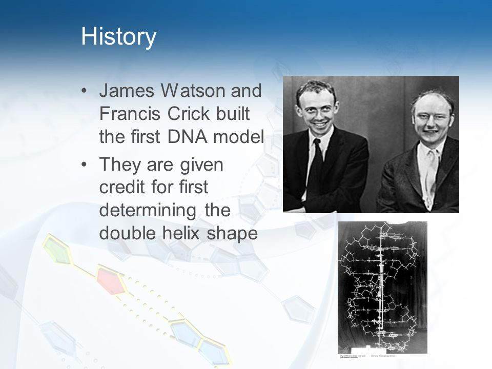 History James Watson and Francis Crick built the first DNA model