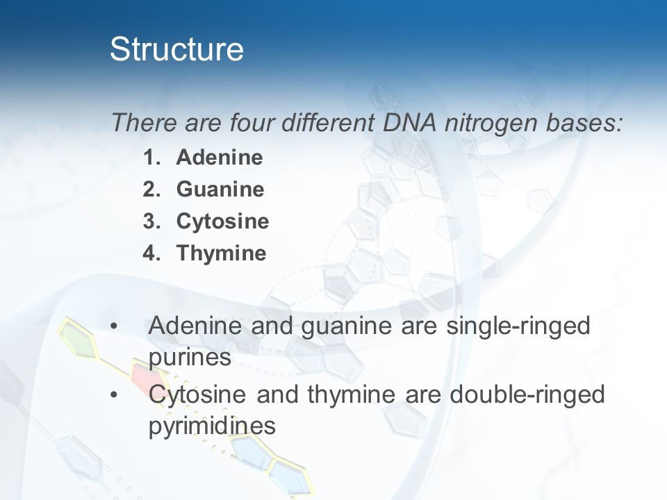 Structure There are four different DNA nitrogen bases: