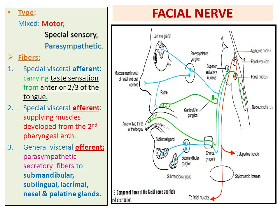 Facial nerve tongue