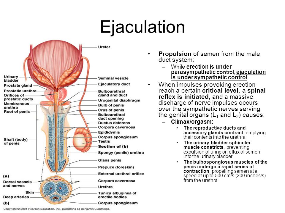 speed of sperm on ejaculation