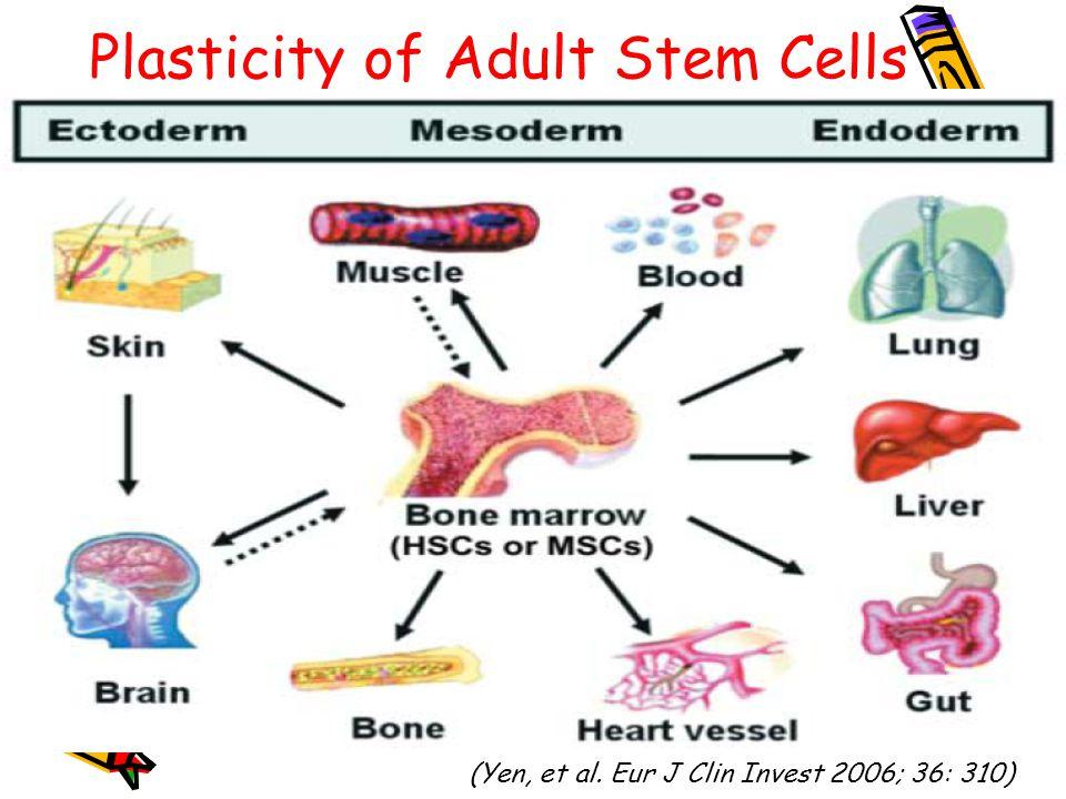 Adult Stem Cell Plasticity 92