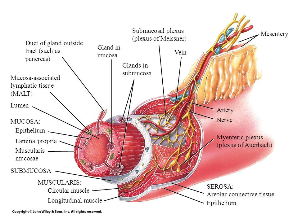 Principles Of Anatomy And Physiology Ppt Video Online