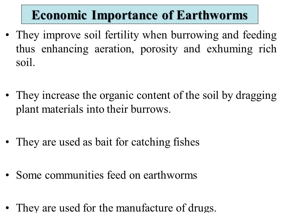 Zly 103 animal diversity phylum annelida ppt video for Soil uses and its importance
