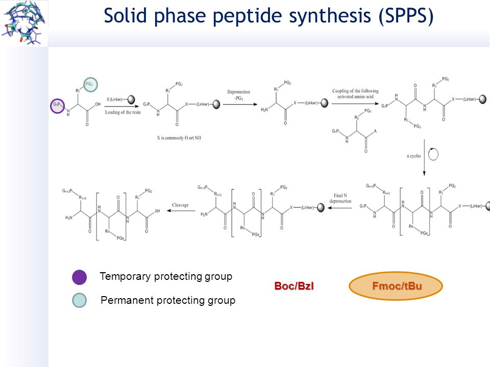 solid phase peptide synthesis pdf