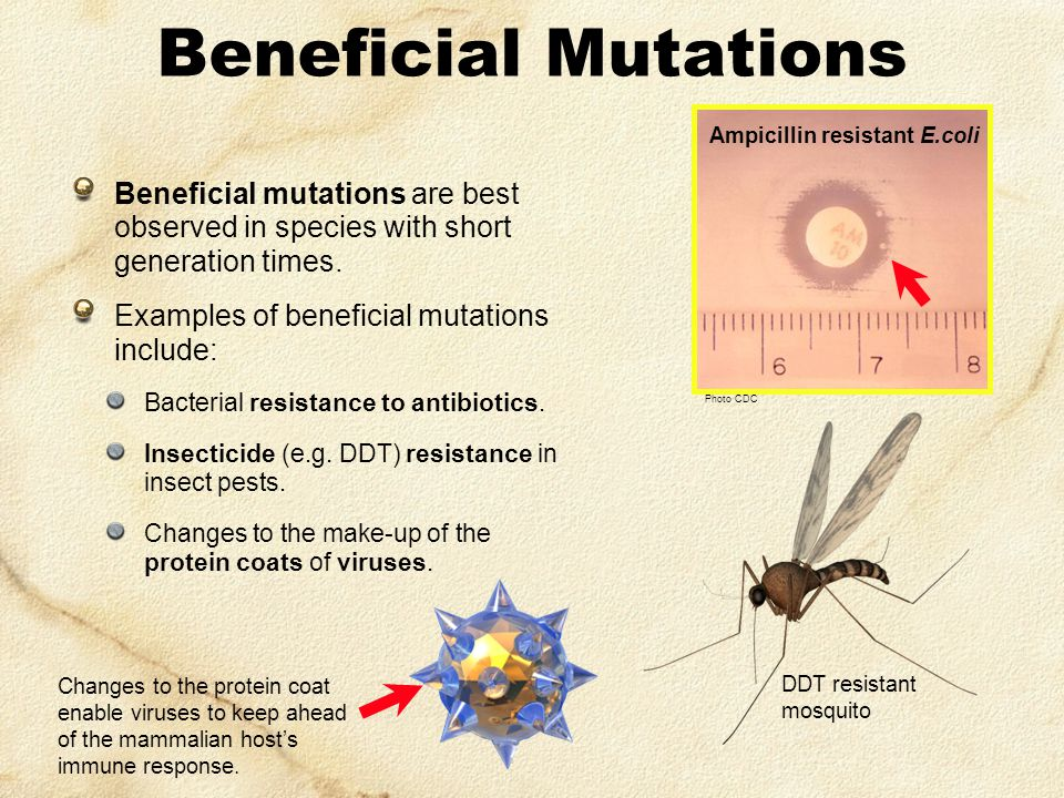 Natural Selection  Best Mutations