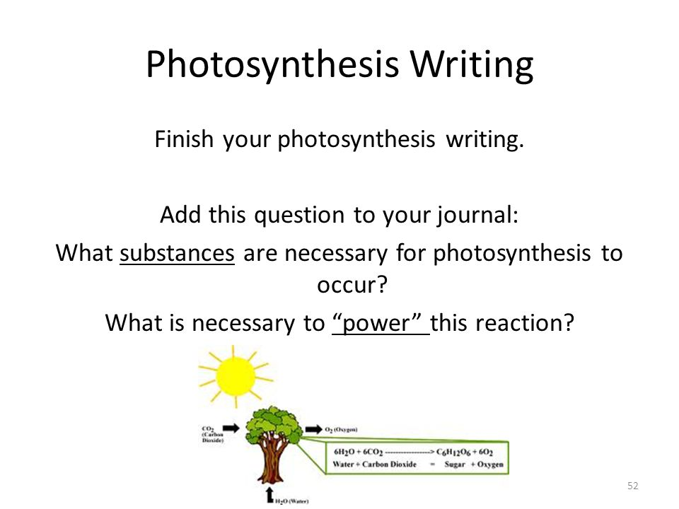 ap biology photosynthesis essay rubric Advanced placement examination biology  answers must be in essay form outline form is not acceptable  1999 ap biology questions author:.