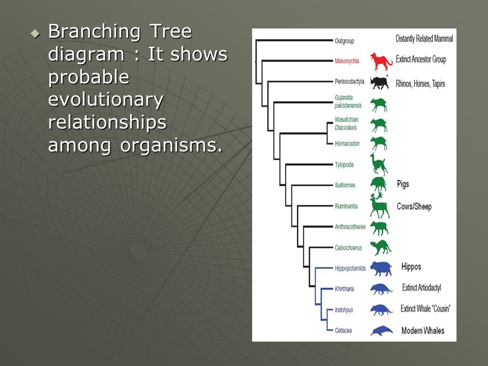 Branching Diagram Showing Derived Traits 28 Images Evolutionary