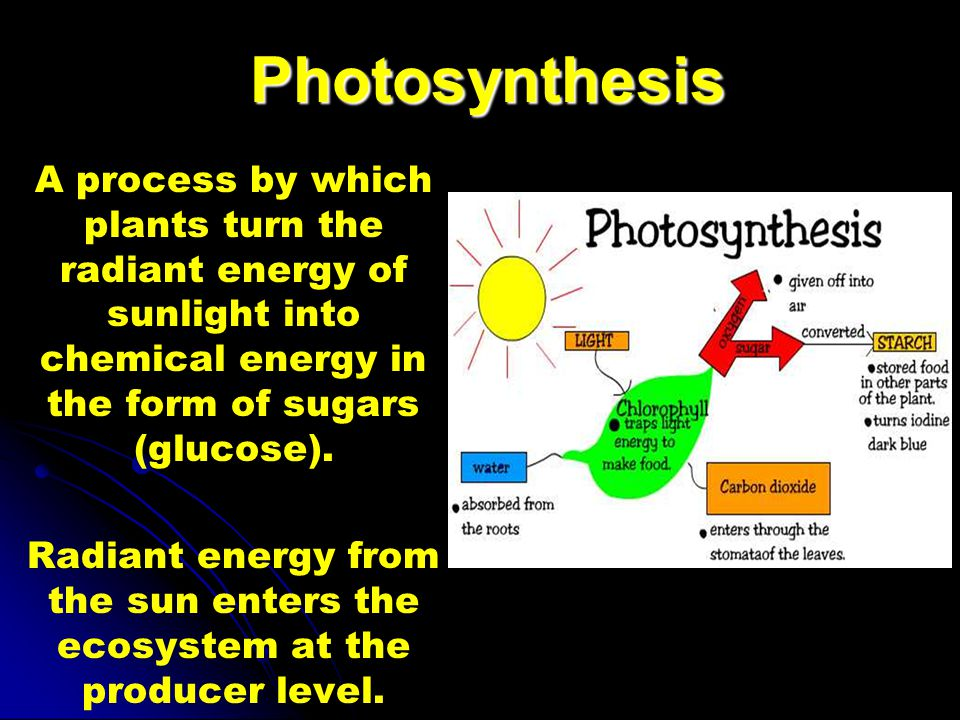 Photosynthesis A process by which plants turn the radiant energy of sunlight into chemical energy in the form of sugars (glucose).