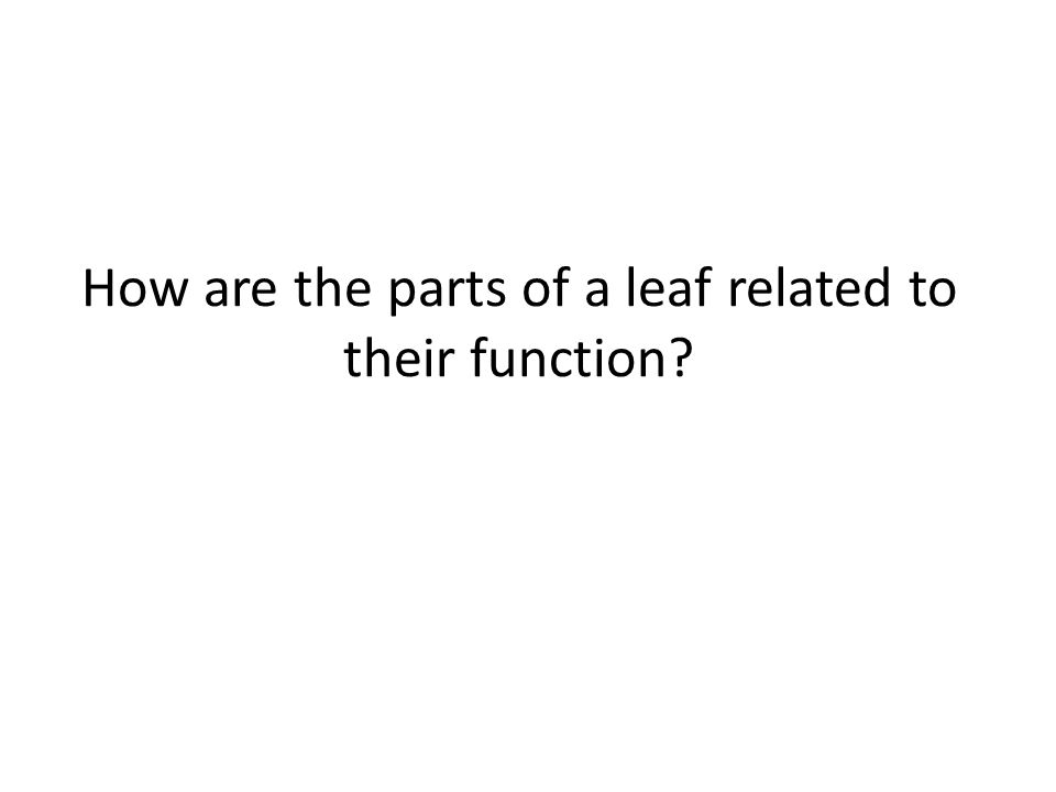 How are the parts of a leaf related to their function