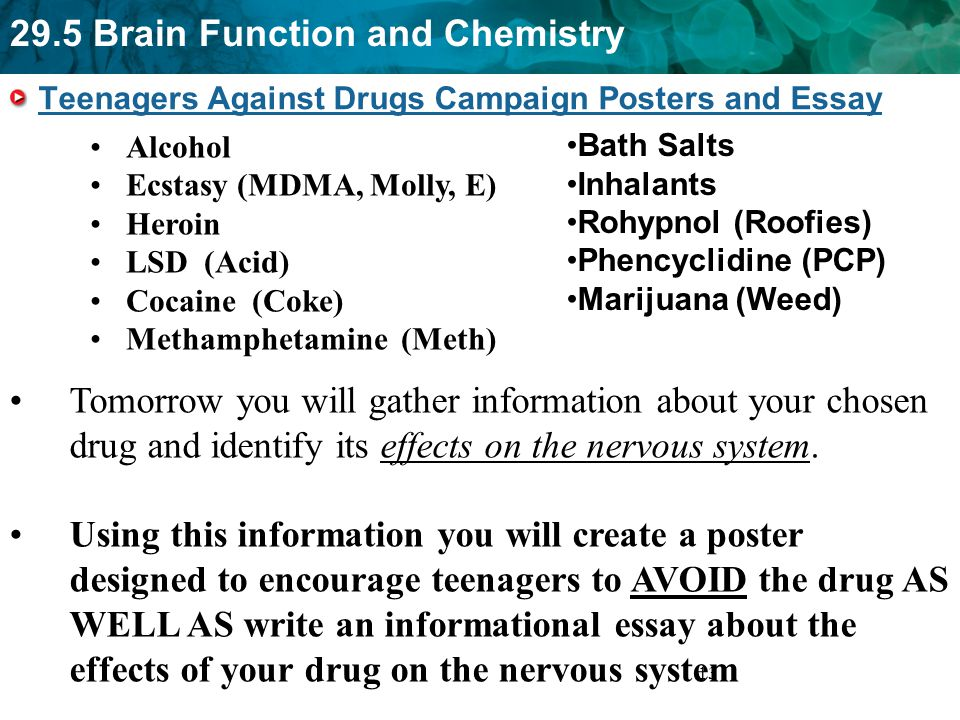 essay on downers drugs maple suyrup diet essay on downers drugs