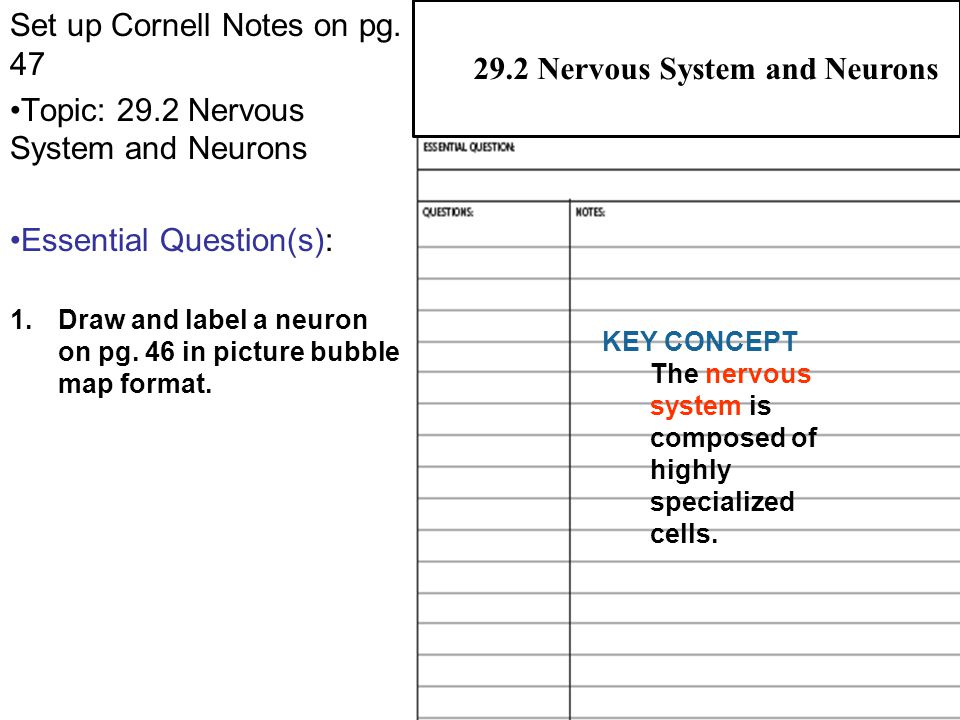 Concept Map Nervous System Answers.29 2 Nervous System And Neurons Ppt Video Online Download