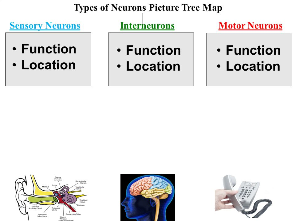 Types of Neurons Picture Tree Map
