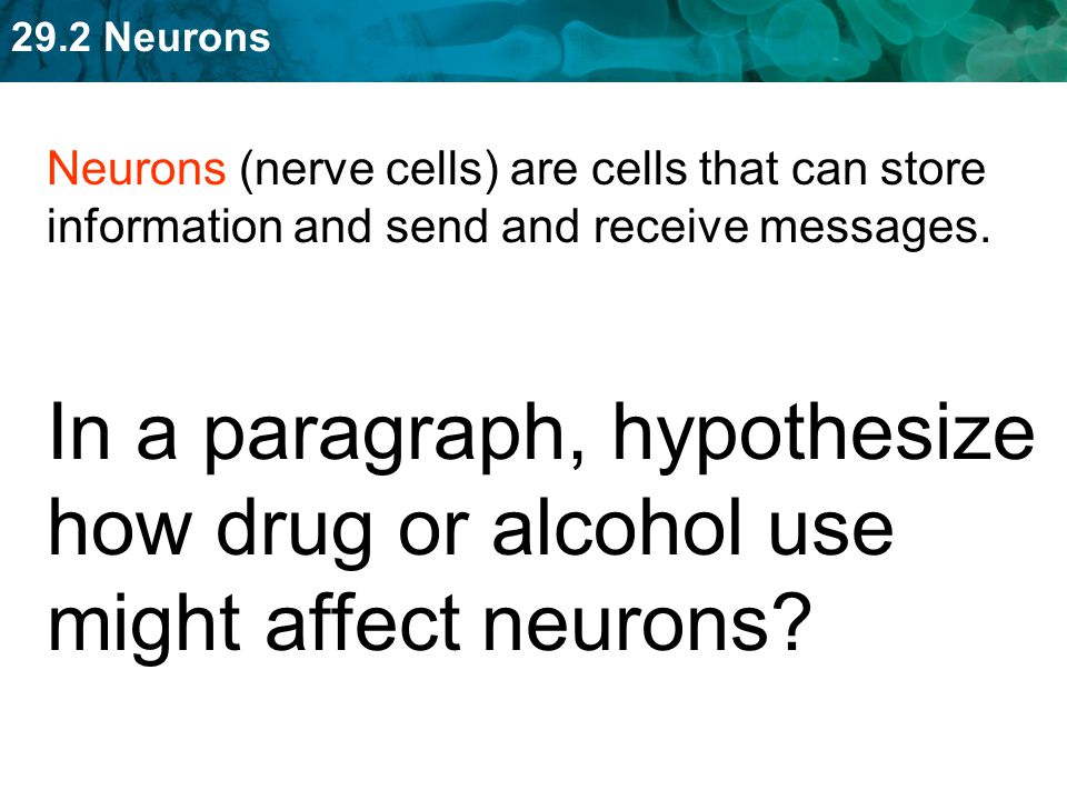 Neurons (nerve cells) are cells that can store information and send and receive messages.