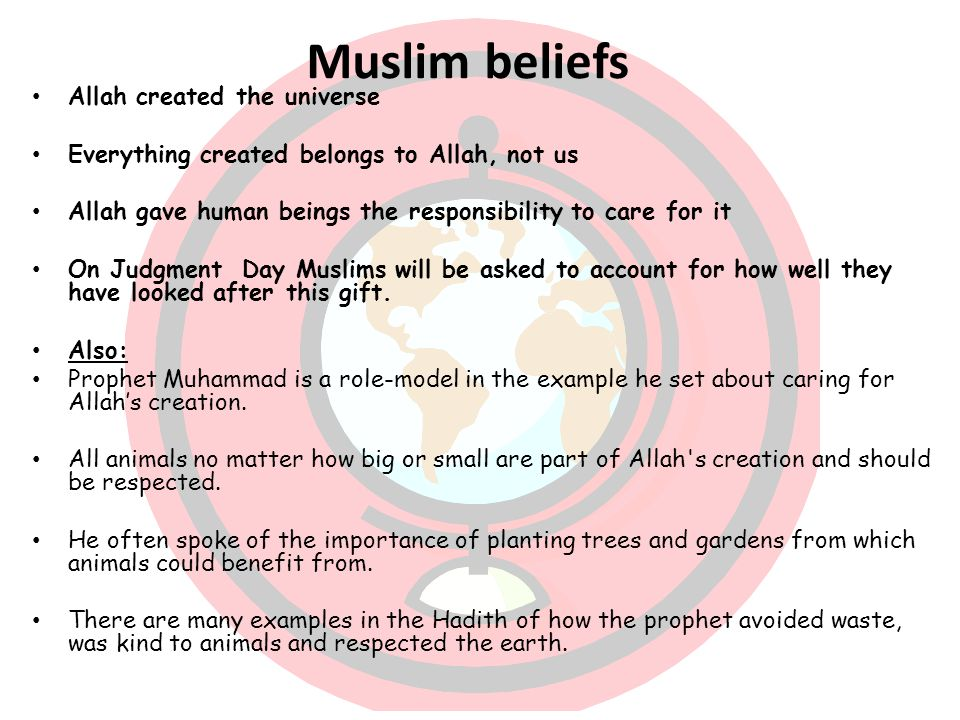 muslim beliefs The following questions about basic muslim beliefs (2 through 12) are answered in accord with the scholars mentioned above, reflecting majority sunni views 2.