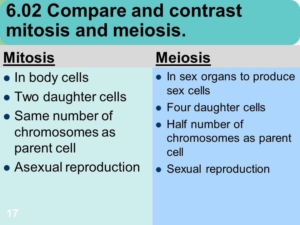 compare and contrast essay on mitosis and meiosis Wanted your undivided attention mitosis vs meiosis lab 3 mitosis and meiosis ap biology essay lab essays mitosis compare and contrast mitosis and meiosis.