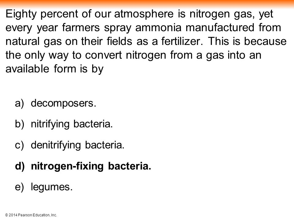 Eighty percent of our atmosphere is nitrogen gas, yet every year farmers spray ammonia manufactured from natural gas on their fields as a fertilizer. This is because the only way to convert nitrogen from a gas into an available form is by