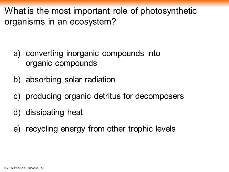 What is the most important role of photosynthetic organisms in an ecosystem