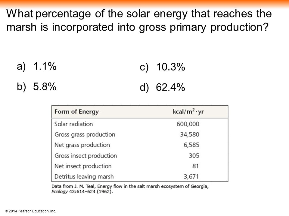 What percentage of the solar energy that reaches the marsh is incorporated into gross primary production