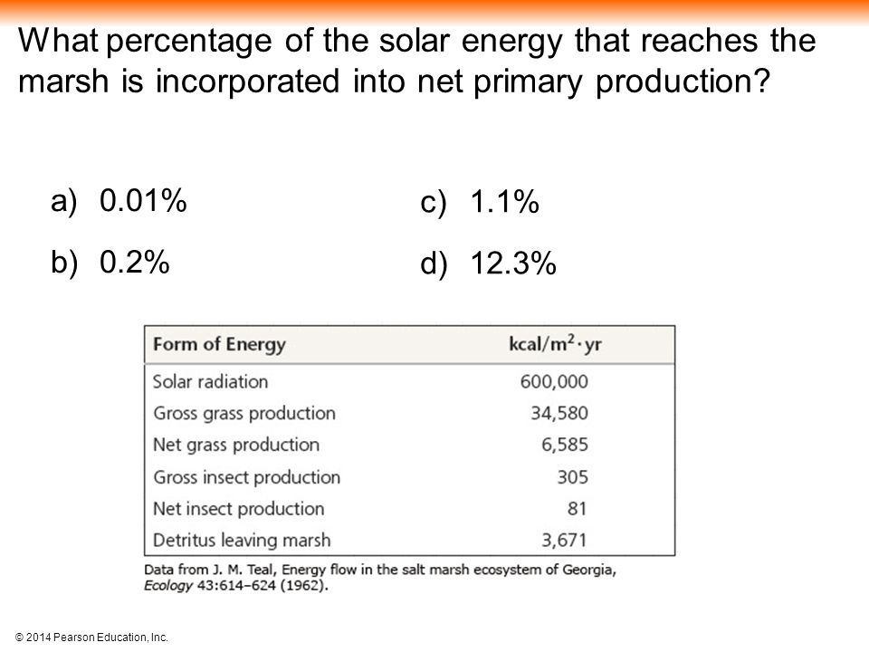 What percentage of the solar energy that reaches the marsh is incorporated into net primary production