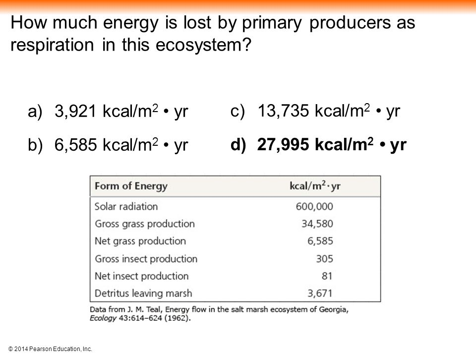 How much energy is lost by primary producers as respiration in this ecosystem