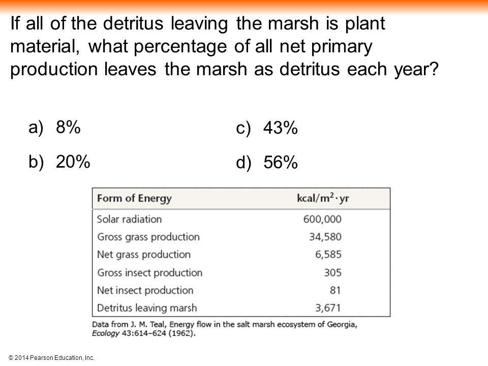 If all of the detritus leaving the marsh is plant material, what percentage of all net primary production leaves the marsh as detritus each year