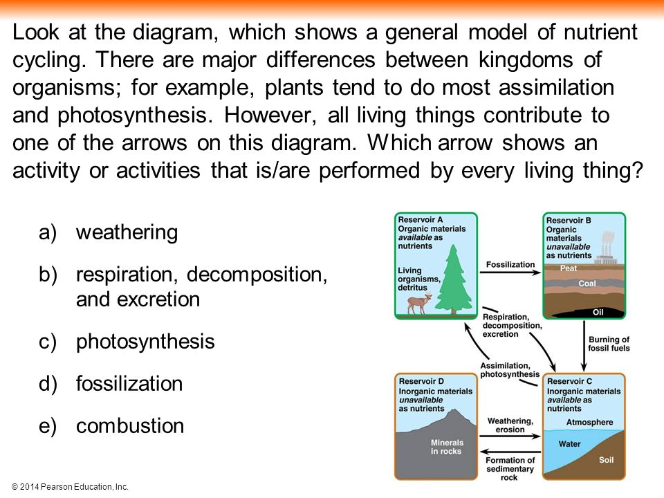 Look at the diagram, which shows a general model of nutrient cycling