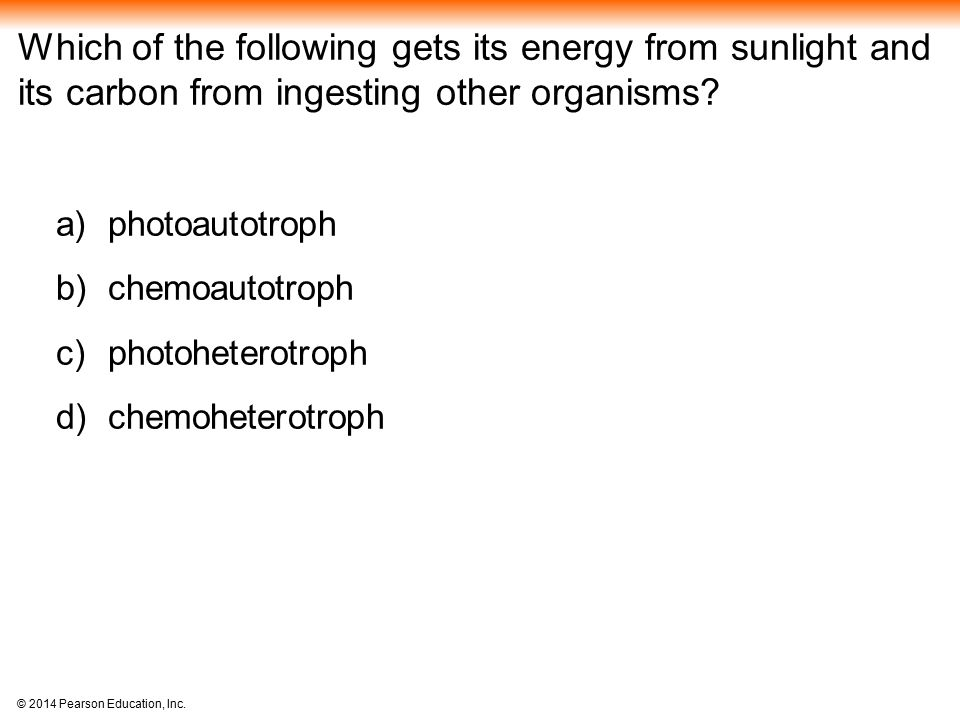 Which of the following gets its energy from sunlight and its carbon from ingesting other organisms