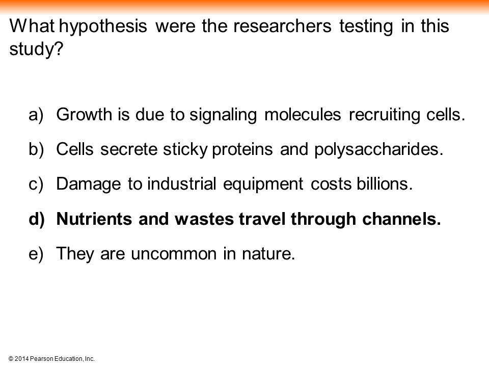 What hypothesis were the researchers testing in this study