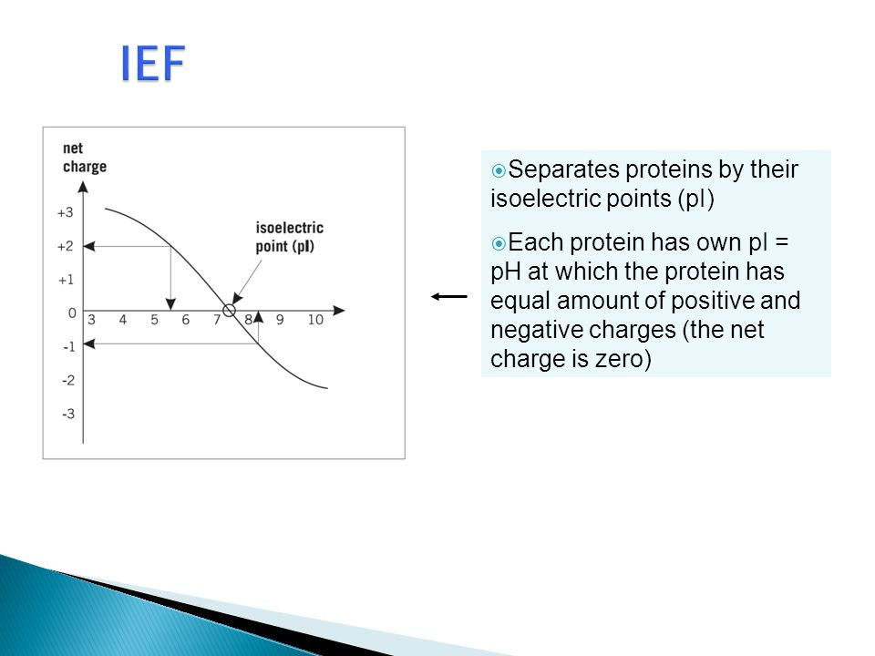 IEF Separates proteins by their isoelectric points (pI)