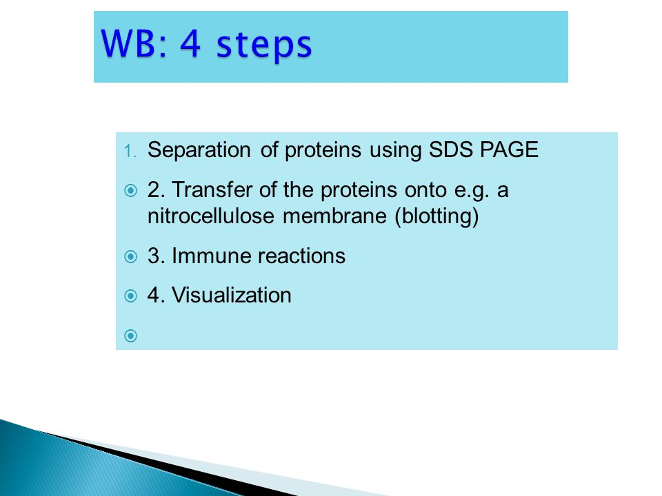 WB: 4 steps Separation of proteins using SDS PAGE