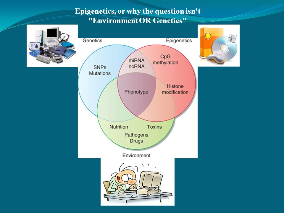 Epigenetics, or why the question isn t Environment OR Genetics