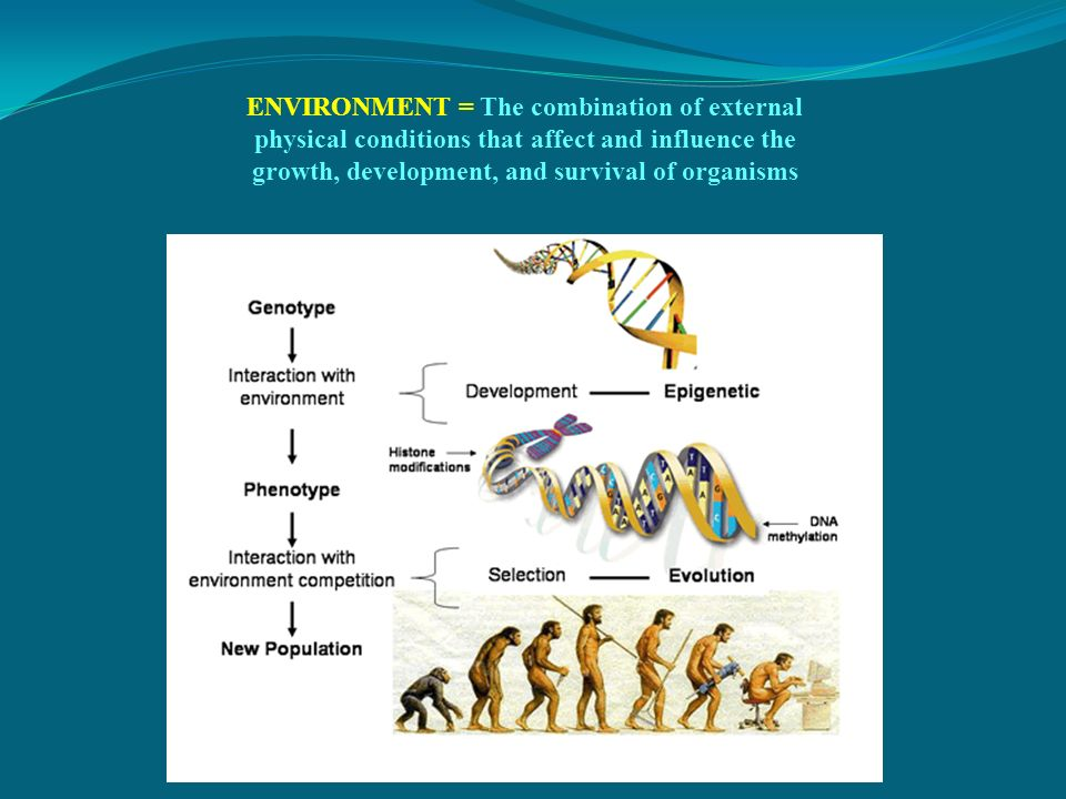 ENVIRONMENT = The combination of external physical conditions that affect and influence the growth, development, and survival of organisms