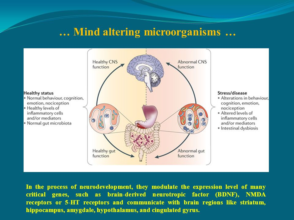 … Mind altering microorganisms …