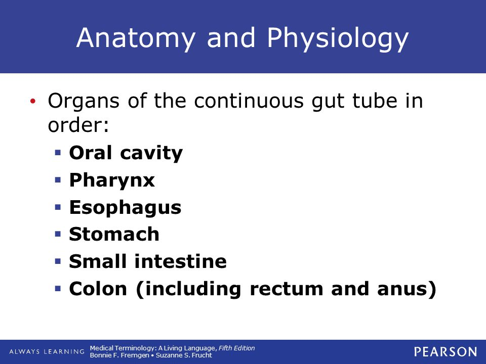 physiology of small intestine The small intestine is part of the digestive system learn about the small intestine and its function.