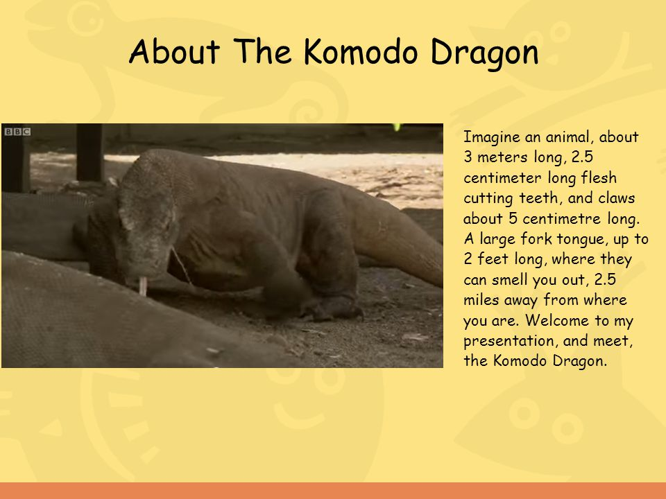 About The Komodo Dragon