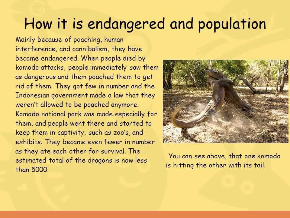 How it is endangered and population