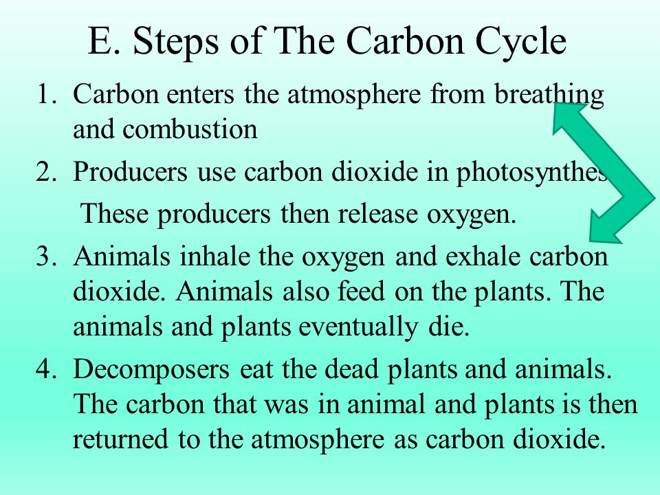 E. Steps of The Carbon Cycle