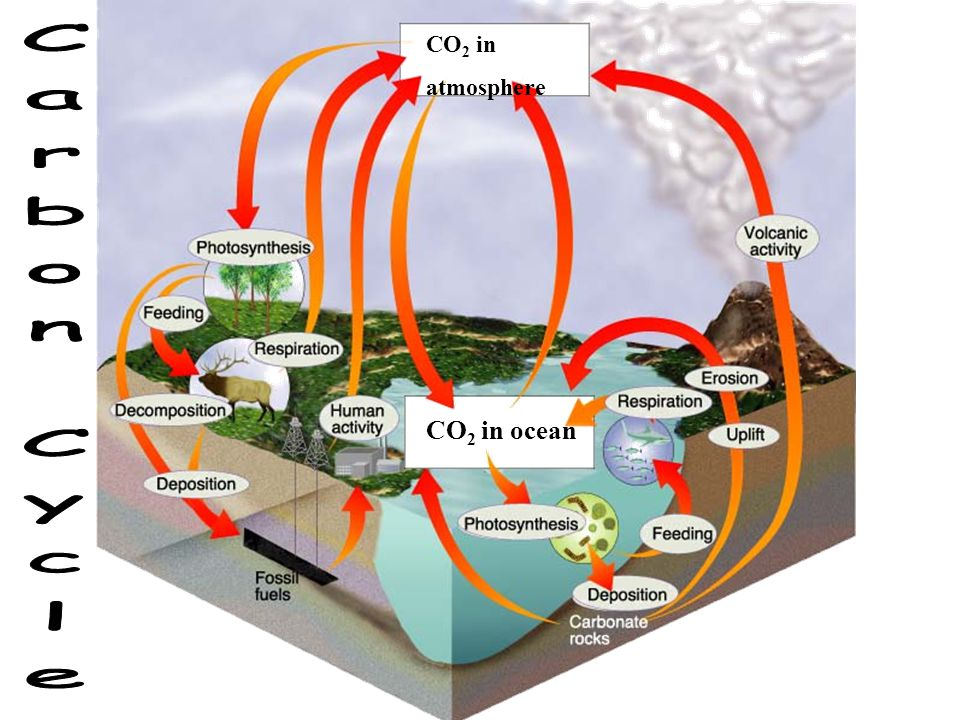 CO2 in atmosphere Carbon Cycle CO2 in ocean
