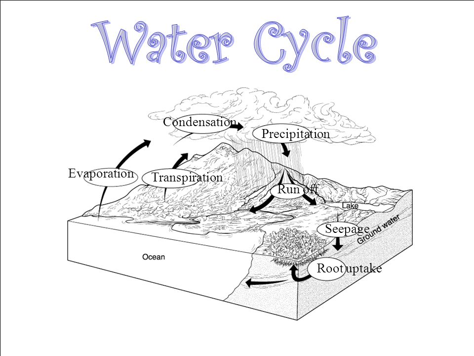 Water Cycle Condensation Precipitation Evaporation Transpiration