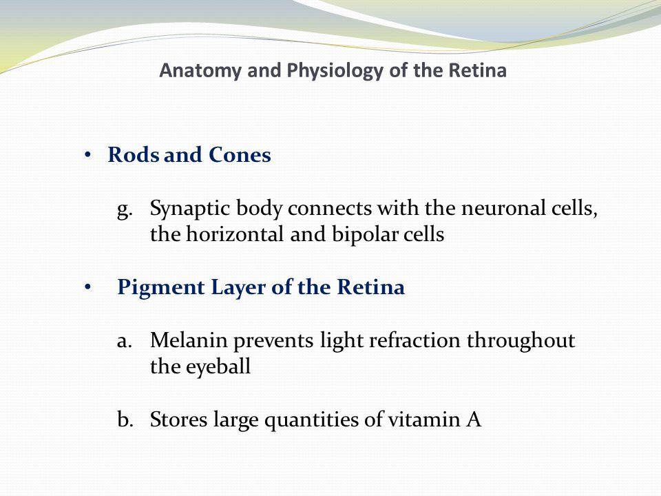 Erfreut Anatomy And Physiology Of Retina Galerie - Menschliche ...